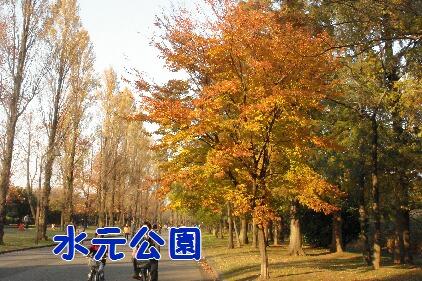 DSC05300.jpg