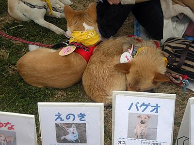 318oyakai43.jpg