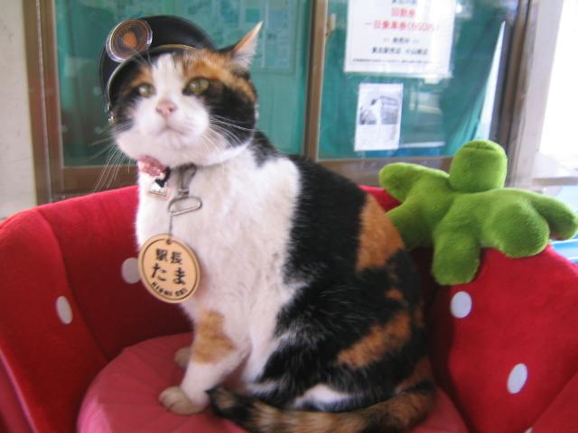 猫の駅長たま画像1