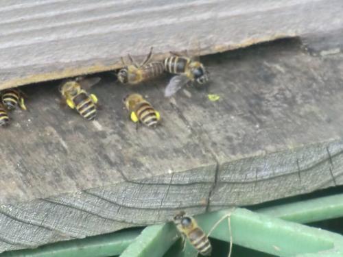 6月20日の蜂