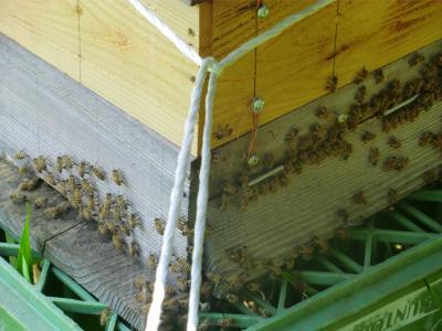 6月23日の蜂