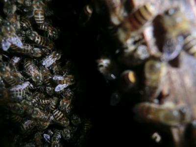 蜂の巣箱の中(2011年7月19日)