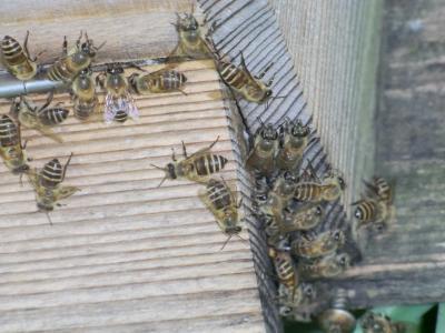 蜂の巣箱の入り口