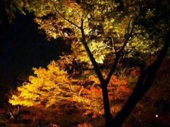 ライトアップされた紅葉(清水寺にて)