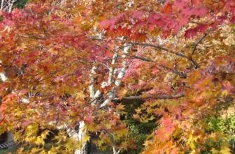 観心寺の紅葉3