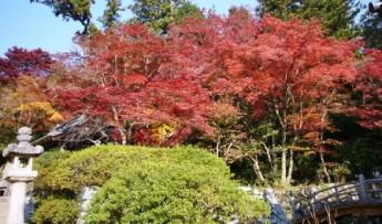 観心寺の紅葉2