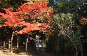 紅葉と竹林(観心寺にて)