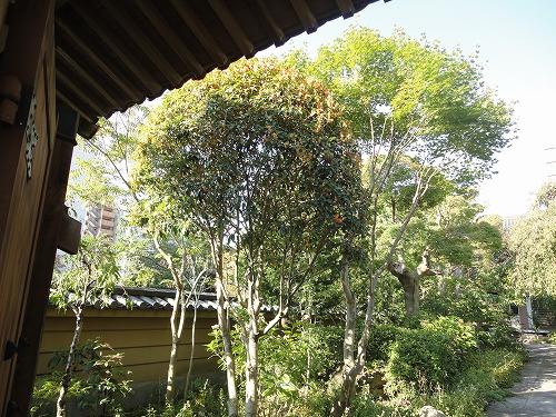 1110okotoba006.jpg