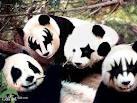 panda_20111222084219.jpg