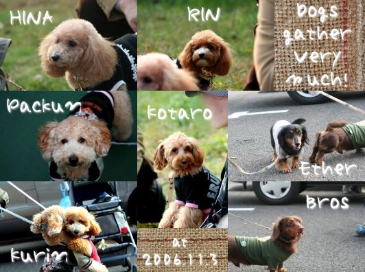 dogs061103.jpg