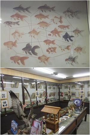 郡山金魚資料館