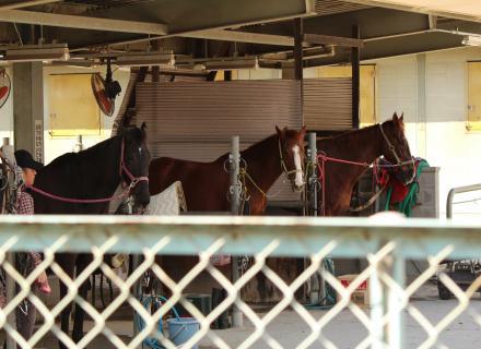 乗馬苑のカワイイお馬さん達