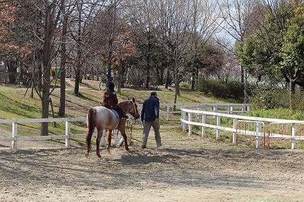 ポニーの曳き馬