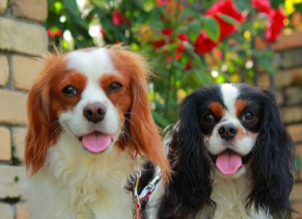 カワイイ愛犬たち