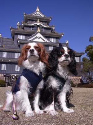岡山城×アルチャビ