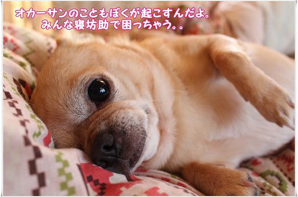 IMG_0451nebosuke.jpg