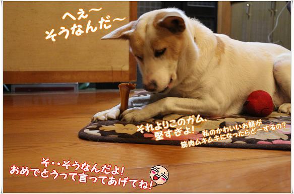 IMG_0459sounanda.jpg