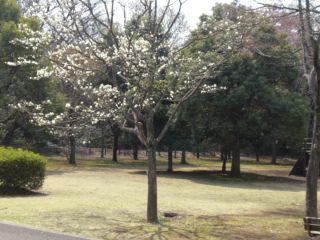 花かいどう 006_R