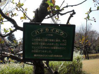 花かいどう 002_R