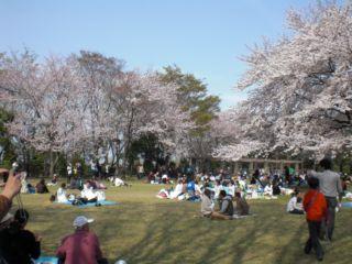 2011さくら 004_R