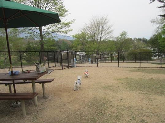 2011GW8-4.jpg