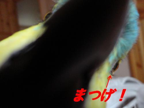 DSC01738_convert_20111123203737_20111123210516.jpg