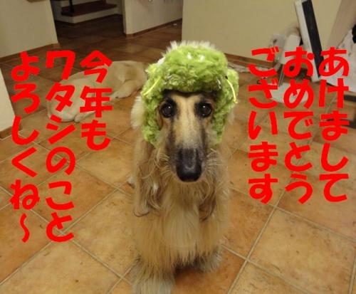 DSC01900_convert_20120101035149.jpg