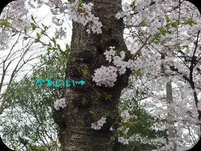 4月9日⑤