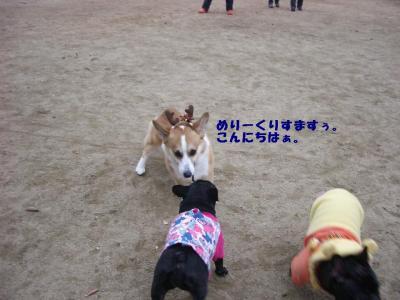 20071229_宝塚ラン7