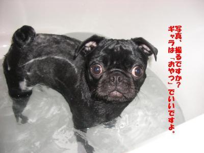 20080119_入浴3