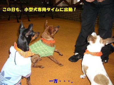 20080203_しつけ教室1