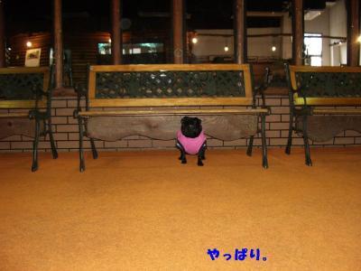 20080203_しつけ教室2