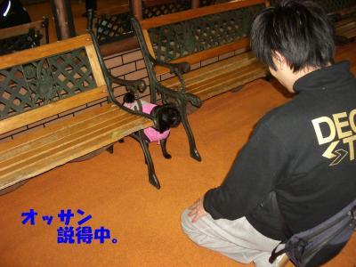 20080203_しつけ教室4