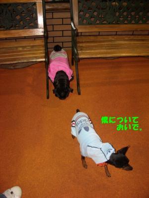 20080203_しつけ教室6