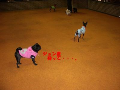 20080203_しつけ教室7