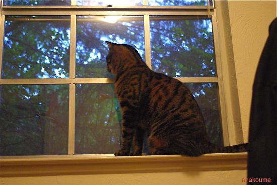 窓はお気に入り1