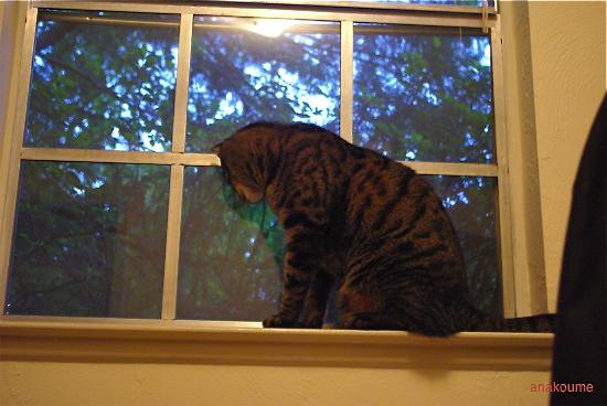 窓はお気に入り2
