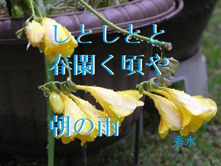 SD朝の雨句入