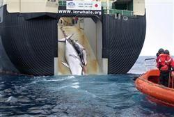 公開された鯨の写真