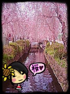 sakurami1.jpg