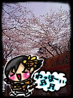 sakurami3.jpg