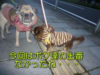 image06_20111129234737.jpg