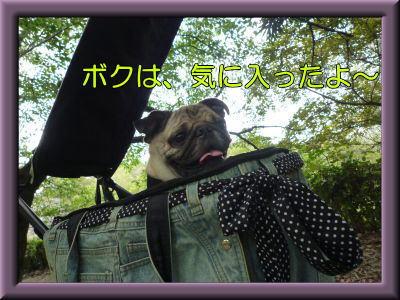 image10_20111118192733.jpg