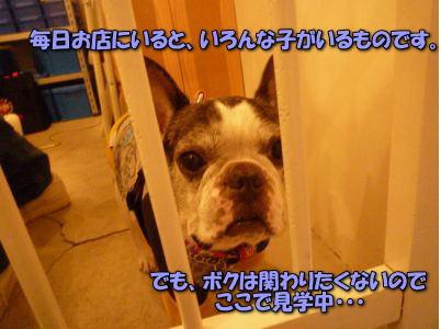 image10_20111227231158.jpg