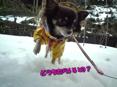 image10_20120109021403.jpg