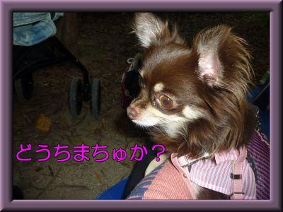 image11_20111118192733.jpg