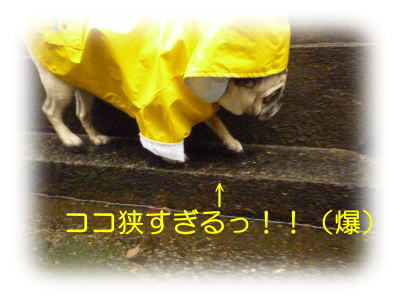 image11_20120115031544.jpg