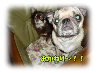 image12_20120112222747.jpg