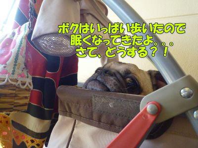 image13_20111002025610.jpg