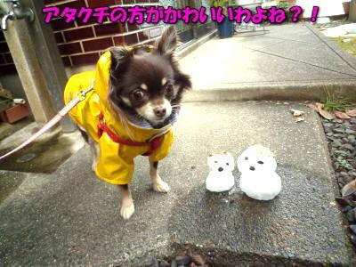 image13_20120109022836.jpg